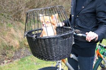 Front-Fahrradkorb für Tiere mit Gitter TRIXIE schwarz 50x35x41cm Bild 4